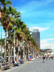 palmy w barcelonie