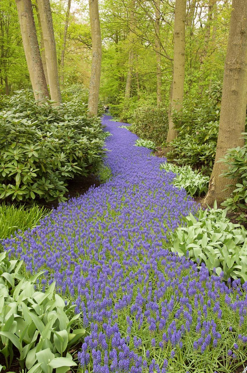najpiękniejszy ogród świata - Holandia