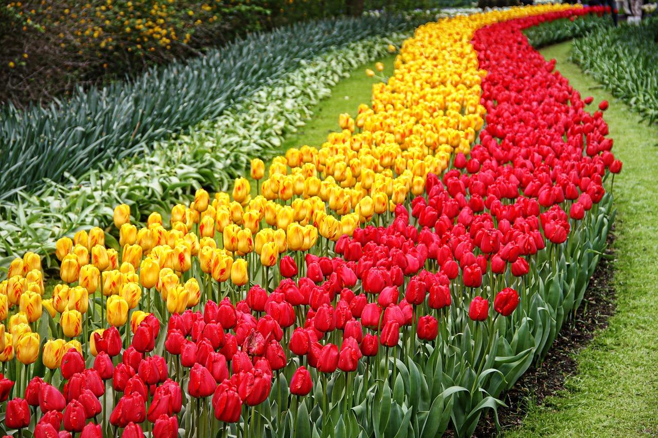 Keukenhof - najpiękniejszy ogród świata